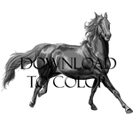 Galloping Grayscale