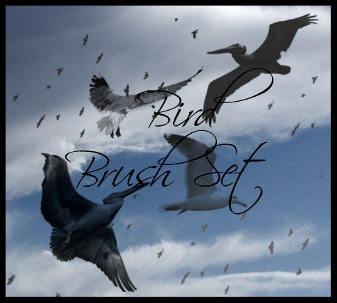 Bird Brush Pack by TheLadyAmalthea