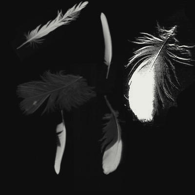 FEATHERS by KuraiDenki