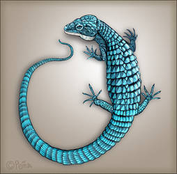 Blue Alligator Lizard