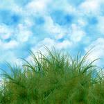 Grass PSD layered file
