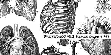 Human Organ PSCS3