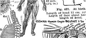 Human Organ 1