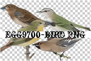 egg9700-bird-4PNG by egg9700