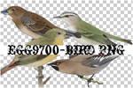 egg9700-bird-4PNG