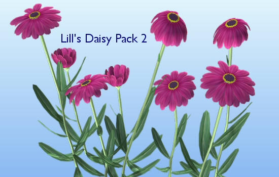 daisy pack 2 by Lill-stock