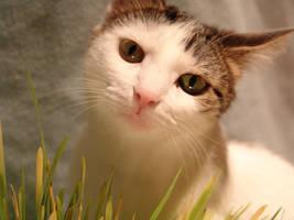 Grass by CatStock