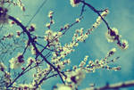 primavera no.1