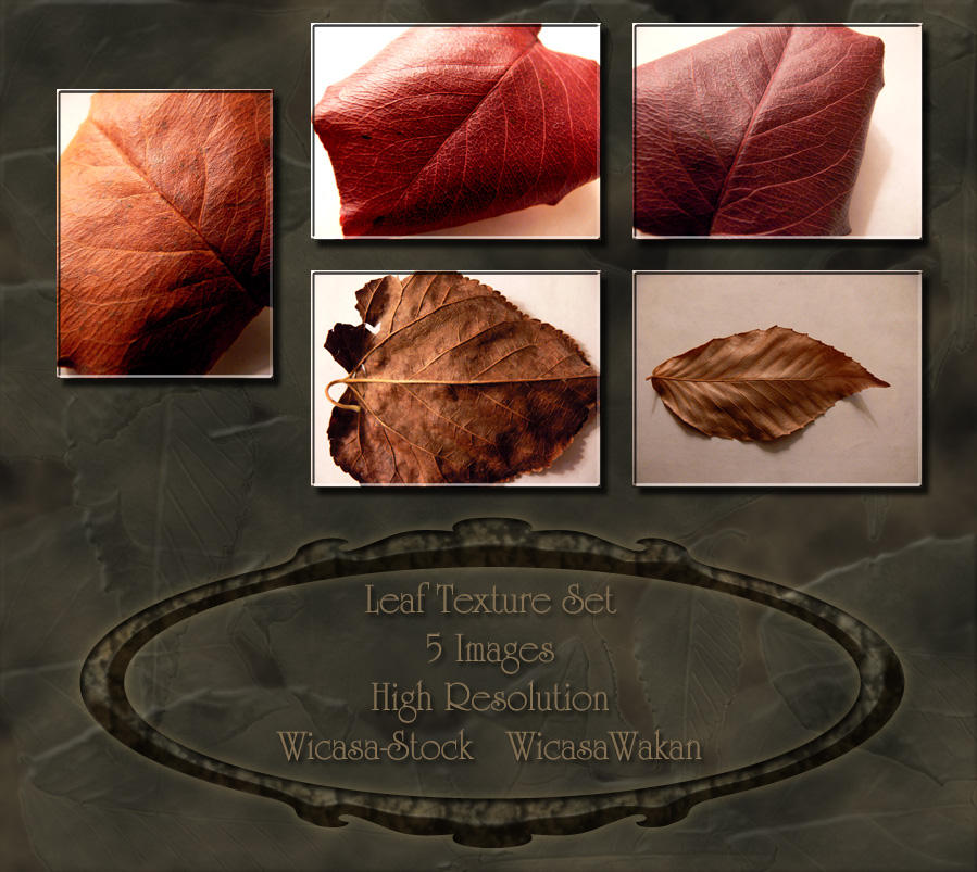 Leaf textures wicasa-stock by Wicasa-stock