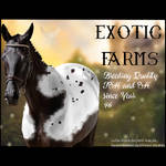 HEE Stable Avatar- Exotic Farms