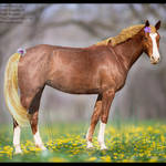 HEE Horse Avatar- Lule