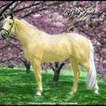 HEE Horse Avatar- Wild Fantasy