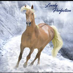 HEE Horse Avatar- Lovely Perfection
