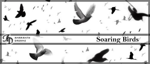 Soaring Birds by elestrial