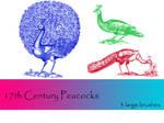 17th Century Peacocks