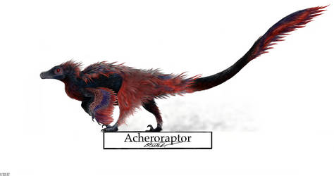 Acheroraptor by BackOcean