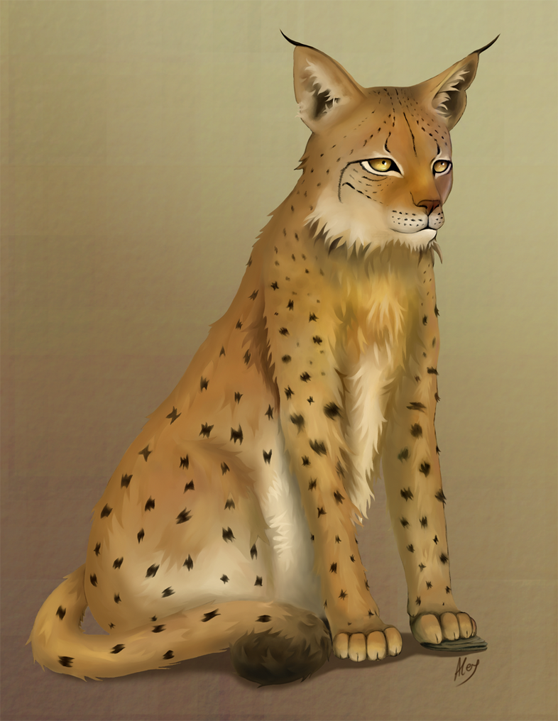 Iberian Lynx by Scheherazade2c