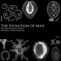 Evolution of Man - Brush Set 1 by FidgetResources