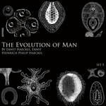 Evolution of Man - Brush Set 1
