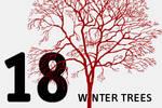 CSH winter trees