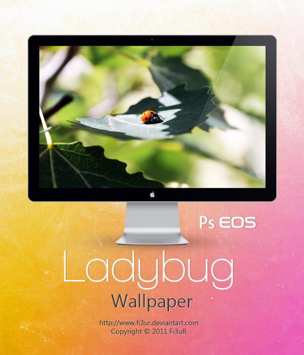 Ladybug Wallpaper by Fi3uR