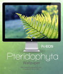Pteridophyta Wallpaper