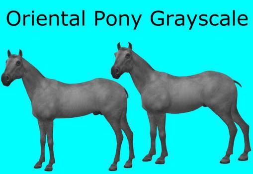 CC0 - Oriental Pony Grayscale