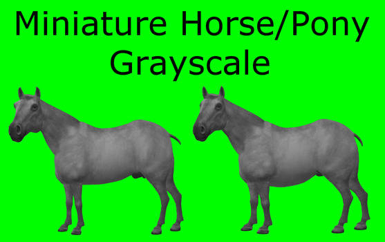 CC0 - Miniature Horse/Pony Grayscale