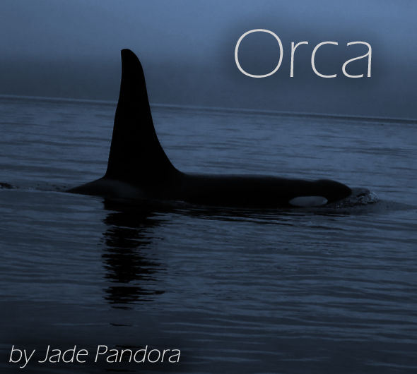 Orca - Flash