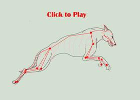 Greyhound Run Cycle by SleepingDeadGirl