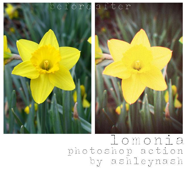 lomonia by ashley-nash