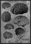Brains Brushes