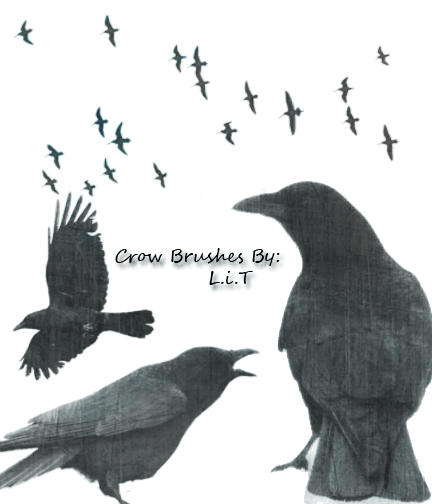 Crow Brushes pk 1 by LiTdesign