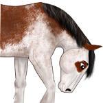 Free ROAN BRUSH FOR HORSES