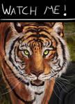 Tiger Snaps