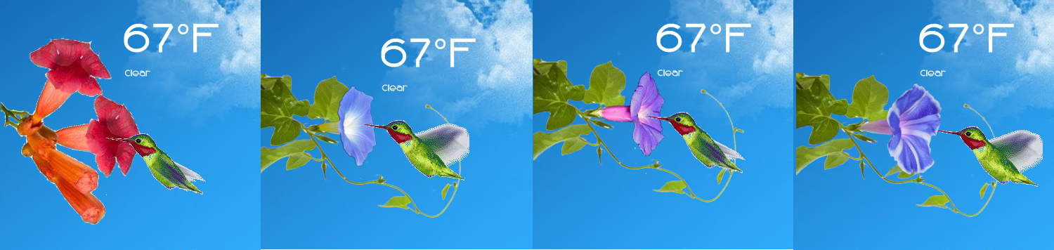 Animated Hummingbird Weather for Rainmeter by ionstorm01