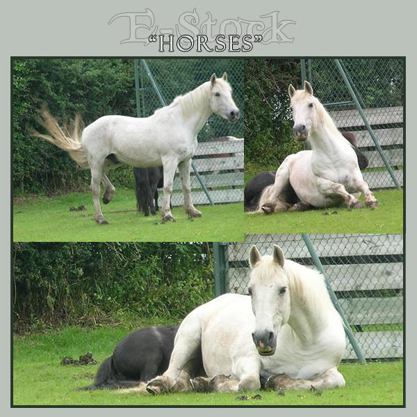 Horses 8 by E-Stock