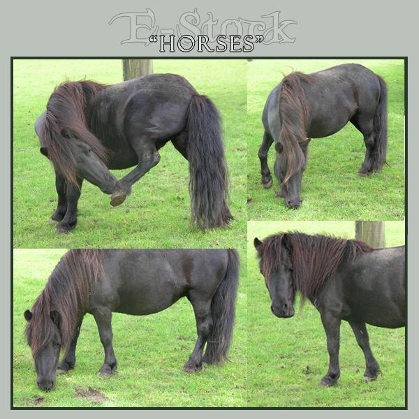 Horses 16 by E-Stock