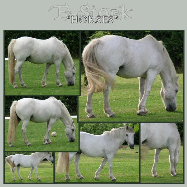 Horses 4 by E-Stock