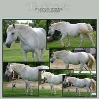 Horses 5 by E-Stock