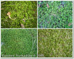 Moss Textures - Stock