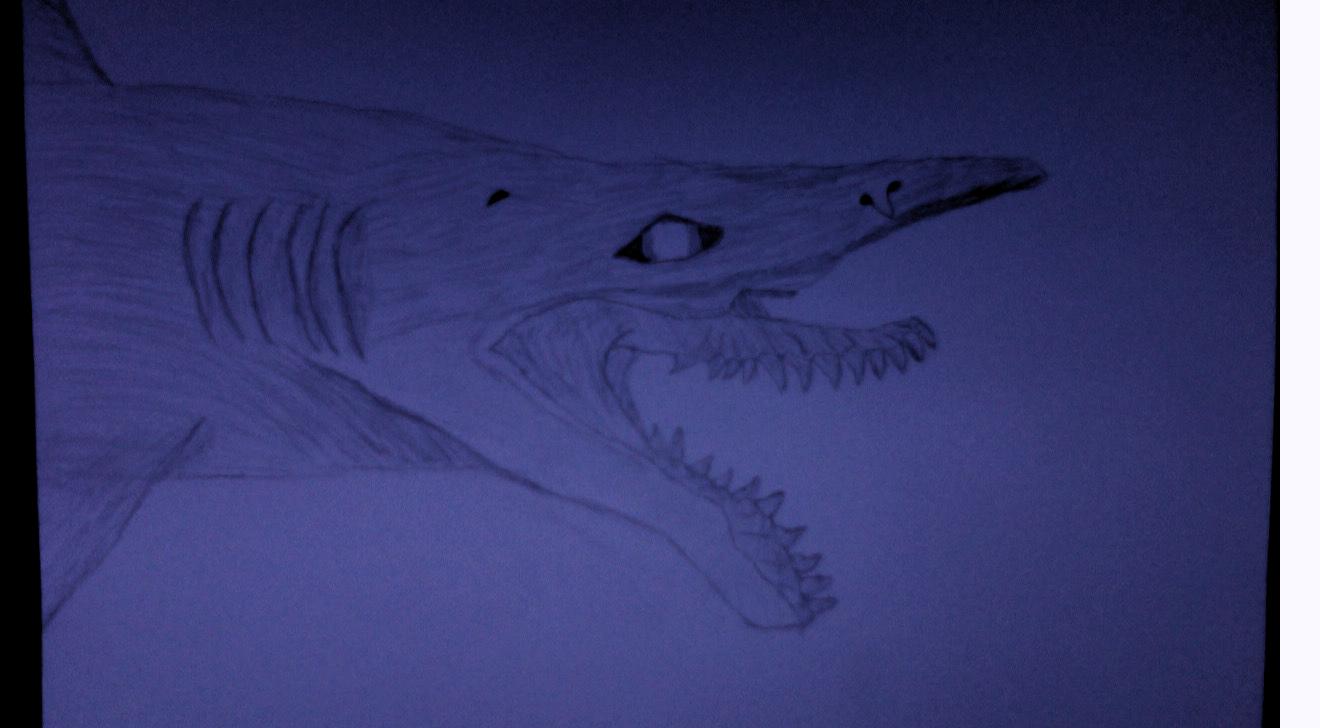 Scapanorhyncus Sketch by alpaca2