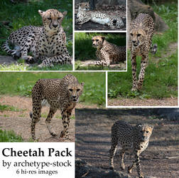 Cheetah Pack by archetype-stock