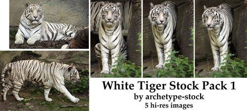White Tiger Stock Pack 1