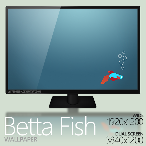 Betta Fish Wallpaper by lysy1993lbn