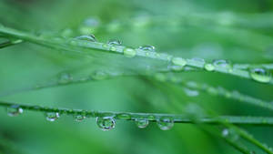 Wet Grass wallpaper