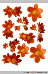 PACK clivia - STOCK