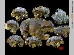 PACK grasfrog - STOCK