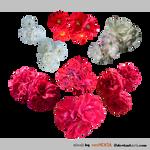 PACK Rosetuft red-white - STOCK