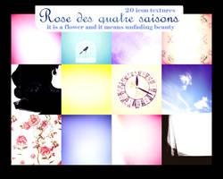 Rose des quatre saisons by innocentLexys